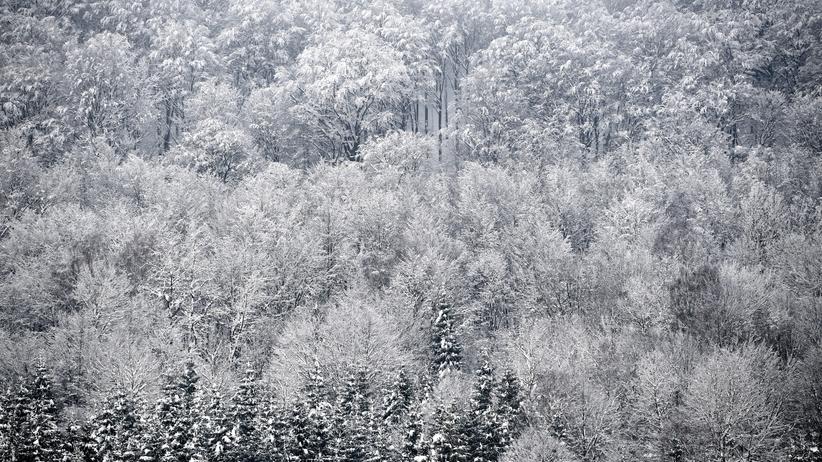 Pogoda. Powrót mrozów i opadów śniegu