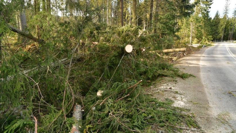 Halny szaleje w Tatrach. Ponad 1700 odbiorców bez prądu. IMGW wydaje alerty