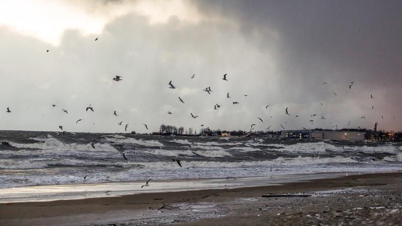 Pierwsze skutki wichur. Stany alarmowe na Zatoce Gdańskiej przekroczone