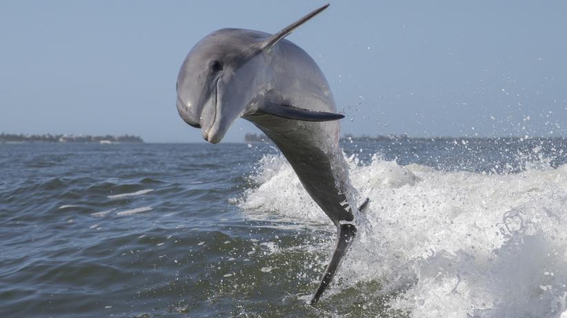 delfin władysławowo trójmiasto