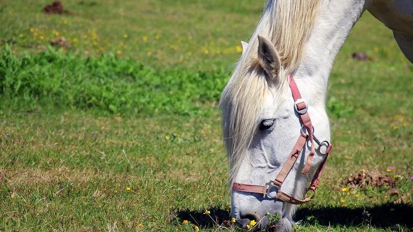 Poseł PO chce uczyć masowania koni. Co na to uczniowie?
