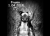 Pies Franek