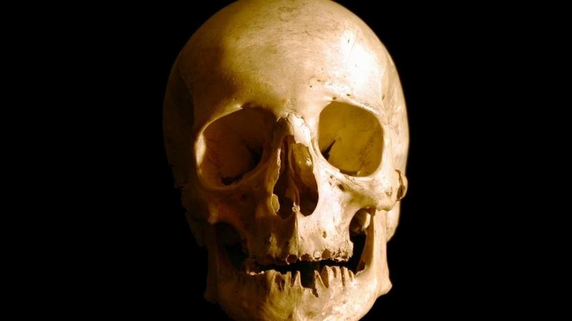 Poznaniacy odtworzą wygląd osób, których czaszki trzymał w szafie niemiecki lekarz