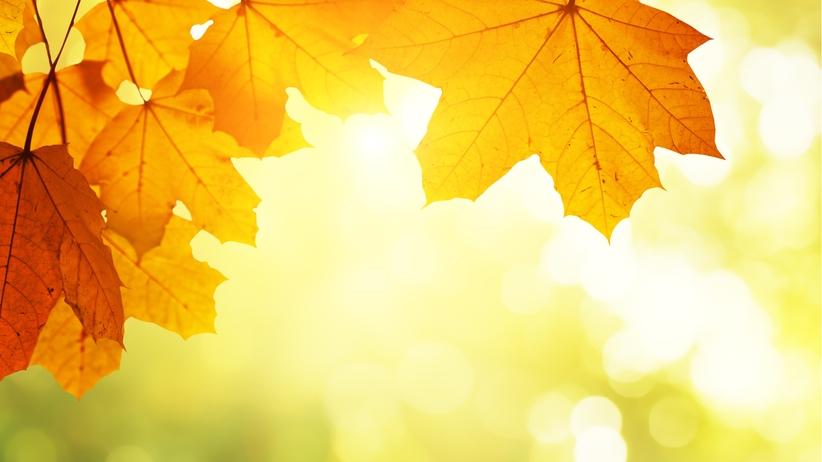 Piękny początek listopada! Nawet do 21 stopni na Podkarpaciu