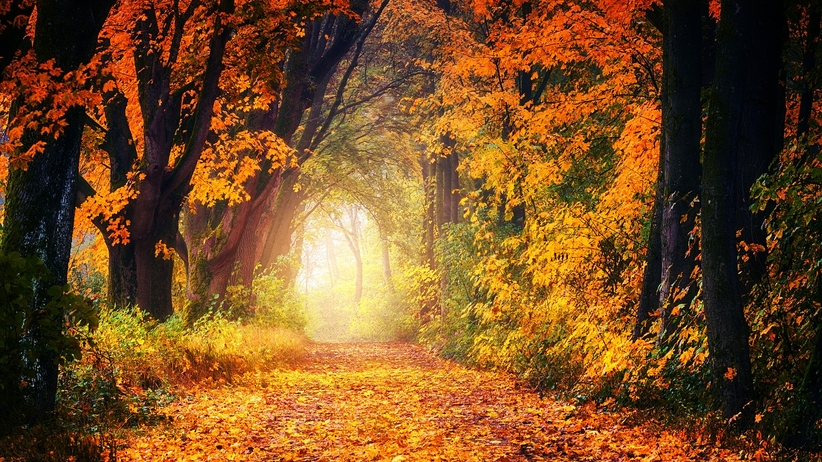Prognoza pogody na niedzielę 14 października