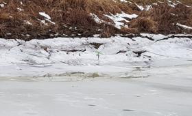 13-latek założył się z kolegą. Pod chłopcem załamał się lód