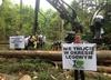 Greenpeace kontra wycinka. Aktywiści zablokowało sprzęt w Puszczy Białowieskiej