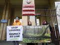 Raport o wycince Puszczy Białowieskiej: ekolodzy nie pozostawiają suchej nitki na ministerstwie