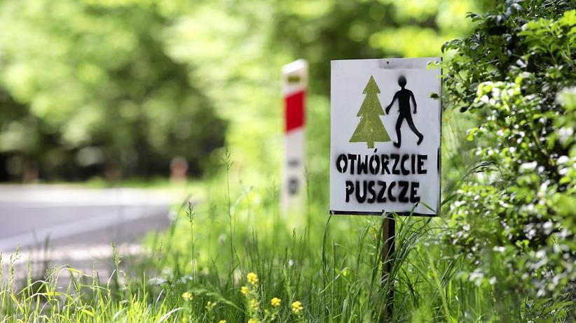 Trybunał Sprawiedliwości podjął decyzję ws. Puszczy Białowieskiej