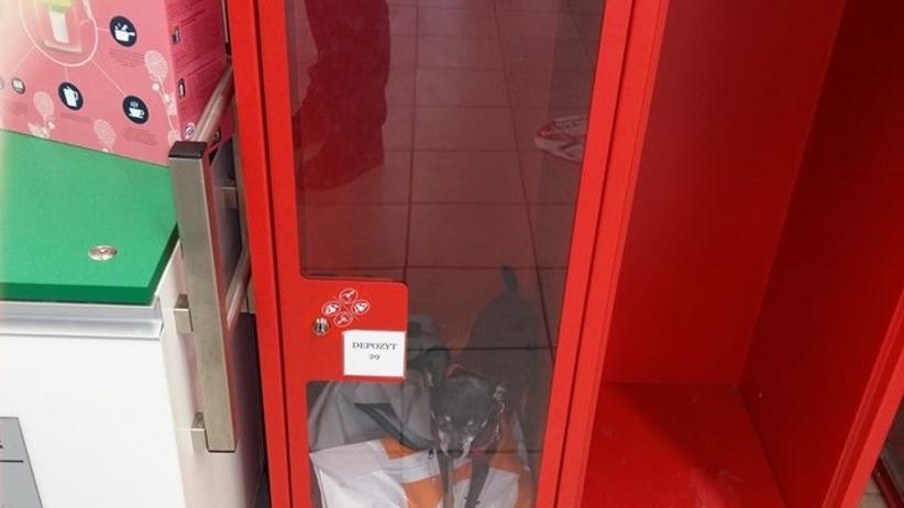 Radom: pies zamknięty w depozycie w markecie