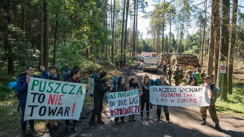 Resort środowiska: w Puszczy Białowieskiej dbamy o bezpieczeństwo publiczne