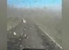 Rój szarańczy sieje spustoszenie w Rosji. Ogłoszono stan wyjątkowy [WIDEO]