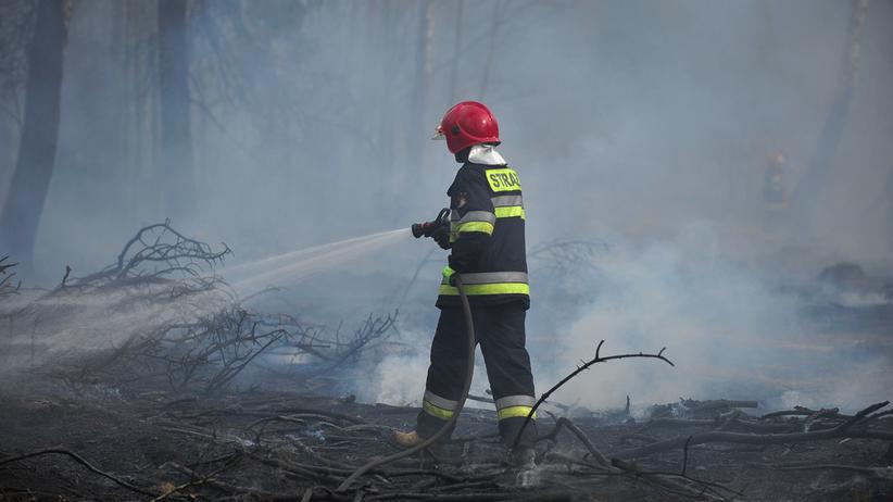 Rzecznik PSP: nie będzie w Polsce fali pożarów lasów