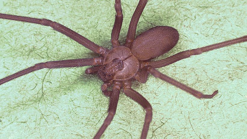 Rzeszów. 31-latka cudem uniknęła śmierci po ukąszeniu jadowitego pająka