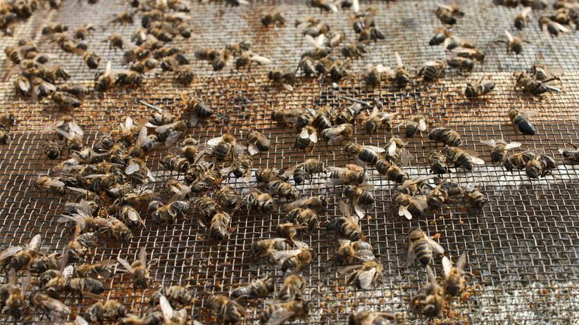 Nieznany sprawca otruł 66 pszczelich rodzin. Zginęło ponad 2,5 mln pszczół
