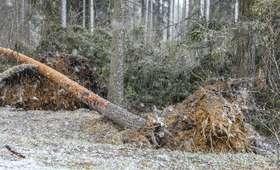 Niebezpieczne wichury nad Polską. Tysiące odbiorców bez prądu, setki interwencji strażaków