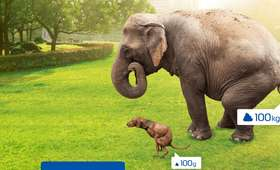 Cała prawda o poznańskim słoniu