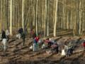 Rząd wprowadził nowe stawki opłat za wycinanie drzew i krzewów