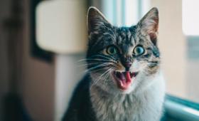 Warszawa dokarmi i wysterylizuje wolno żyjące koty