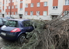 Bilans zniszczeń po wichurach. Kilkanaście osób rannych