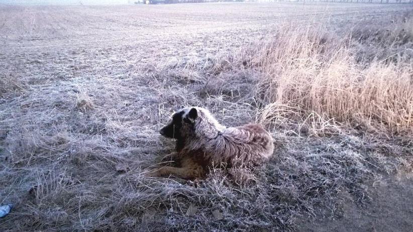 Pies był głodny i wychłodzony, miał zaszronioną sierść. Z pomocą przyszli policjanci