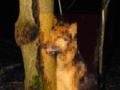 Powiesił psa na drzewie. Policja szuka sprawcy [DRASTYCZNE ZDJĘCIA]