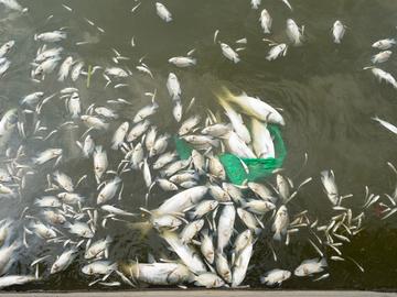 Dużo dobierania ryb