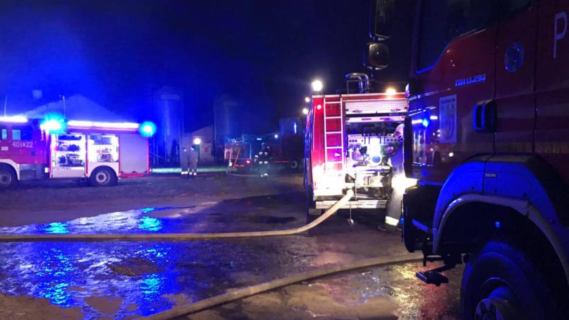 Potężny pożar fermy drobiu. Spłonęło kilka tysięcy indyków [FOTO]