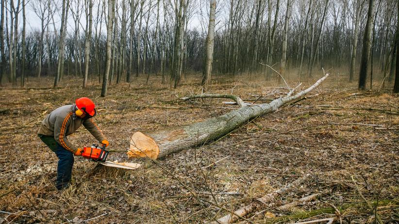 Śmierć na wycince drzewa