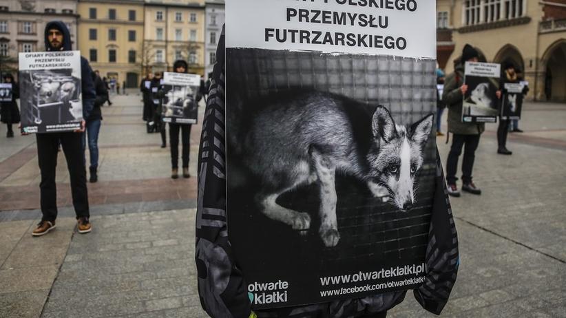 Zapis o zakazie hodowli zwierząt futerkowych znika z projektu ustawy