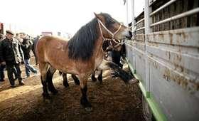 Niemcy otwierają krematorium dla koni. Chcą pomóc w godnym pochówku zwierząt