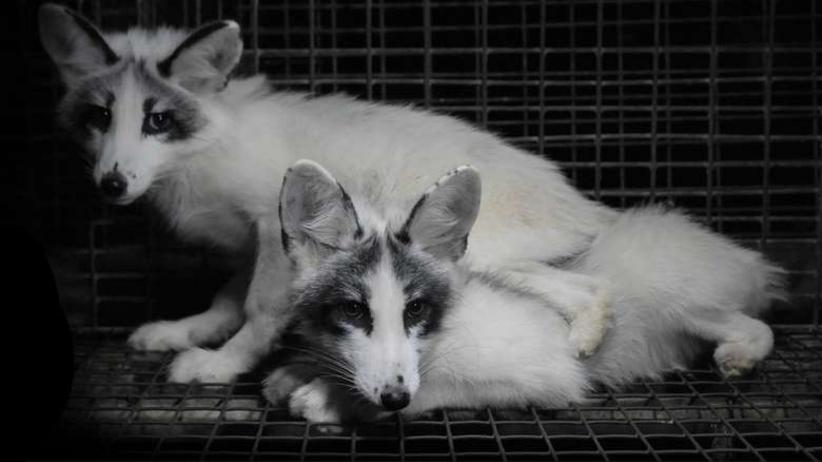 Demonstracja w obronie zwierząt. Stanowcze ''NIE'' dla hodowli futerkowych