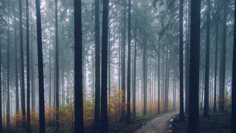Dramat 17-latka. Koledzy wywieźli go do lasu i kazali kopać grób