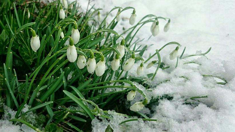 Kiedy koniec zimy? Jasnowidz Jackowski podaje konkretną datę