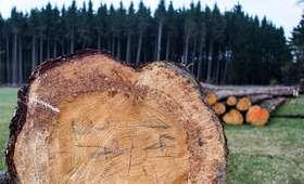 Prezydent podpisał nowelę ustawy dot. wycinki drzew. Sprawdź, co się zmieni!