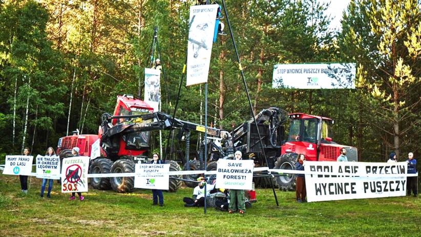 Protest przeciwko wycince drzew w Puszczy Białowieskiej