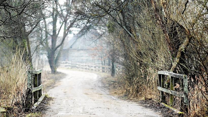 Wycinka w Puszczy Białowieskiej. KE: dajemy ostateczne ostrzeżenie. Ministerstwo odpowiada