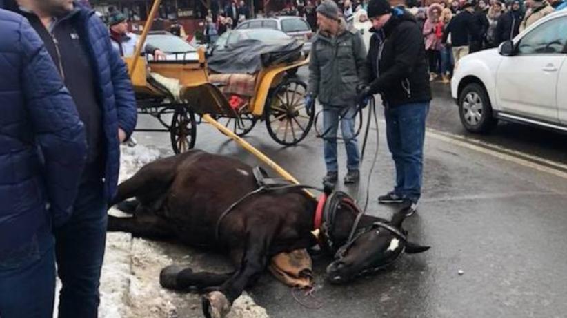 Spłoszony koń wpadł na 10-latka! ''Taranował wszystko co zastał na drodze'' [FOTO]