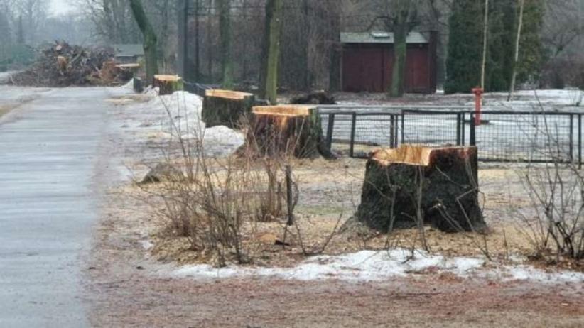 Jak zapobiec wycince drzew? W Gdańsku powstał zespół szybkiego reagowania