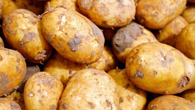 Groźna bakteria w egipskich ziemniakach. Minister chce zakazu importu