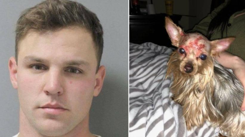 24-latek oblał psa wrzątkiem i włożył do zamrażalnika. Sadysta został aresztowany