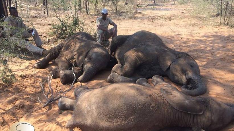 Afryka. Odnaleziono 90 martwych słoni w Botswanie