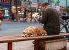 Chiny. W mieście Chengdu zakazano posiadania psów z 22 ras
