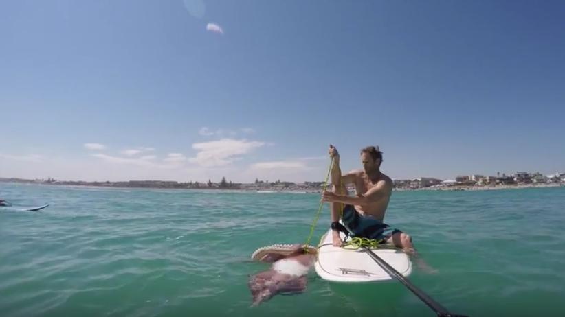 Gigantyczna kałamarnica zaatakowała surfera [WIDEO]
