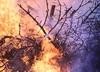 Pożar lasu w Grecji. Jedna ofiara śmiertelna