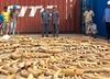 Rekordowy przemyt kości słoniowej. Ponad 3 tony towaru!