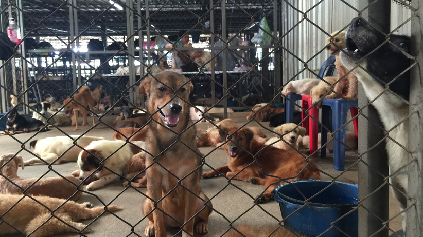 Korea Południowa: największa w kraju ubojnia psów zlikwidowana