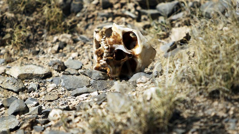 Makabryczne odkrycie. 166 ludzkich czaszek w masowym grobie