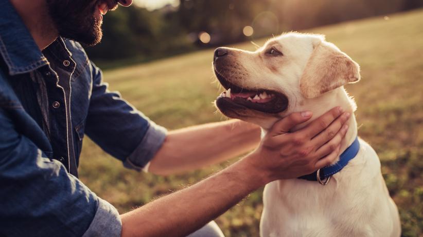 Polizał go pies. Wkrótce stracił wszystkie kończyny