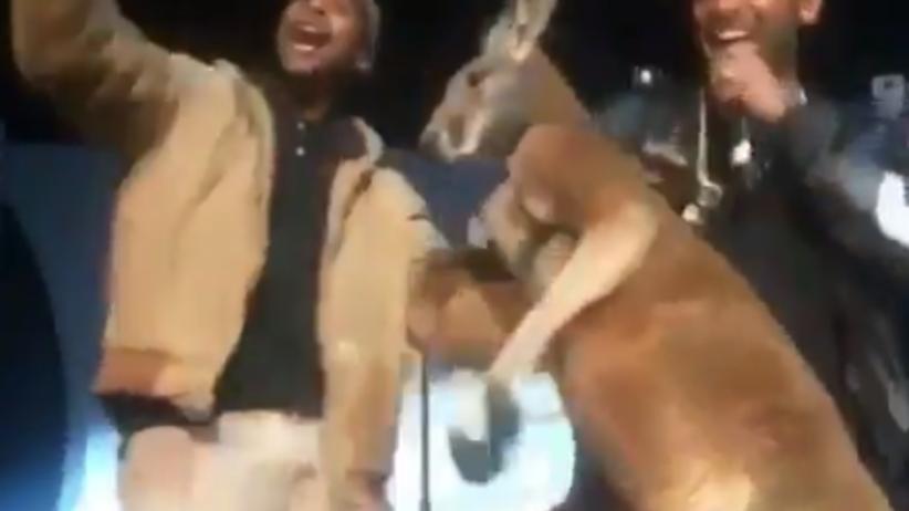 Raper kazał kangurowi tańczyć na scenie. Są protesty